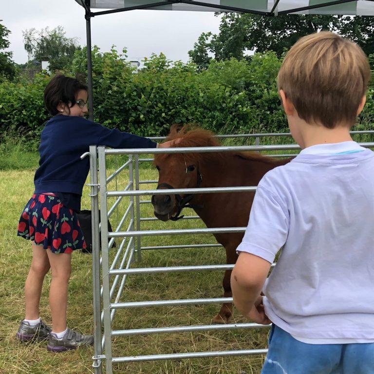 beanstalk pony at barnes festival